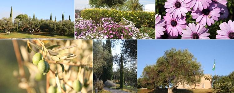 El Museo de la Autonomía elabora un catálogo virtual de los jardines de Blas Infante