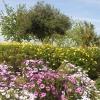 El jardín de Blas Infante
